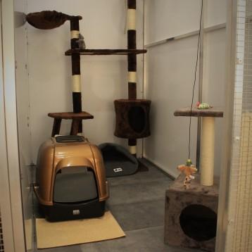 Studio Cat_Studio brun