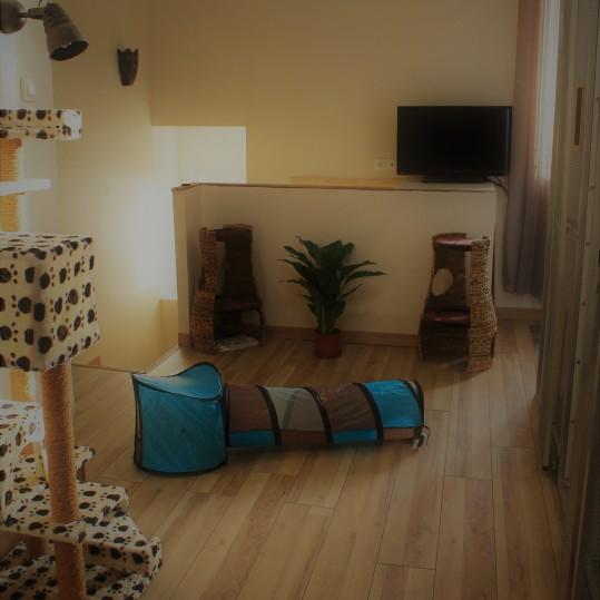 Studio Cat_Salle de jeux commune
